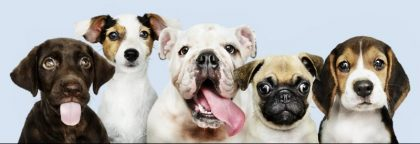 Group portrait of adorable puppies